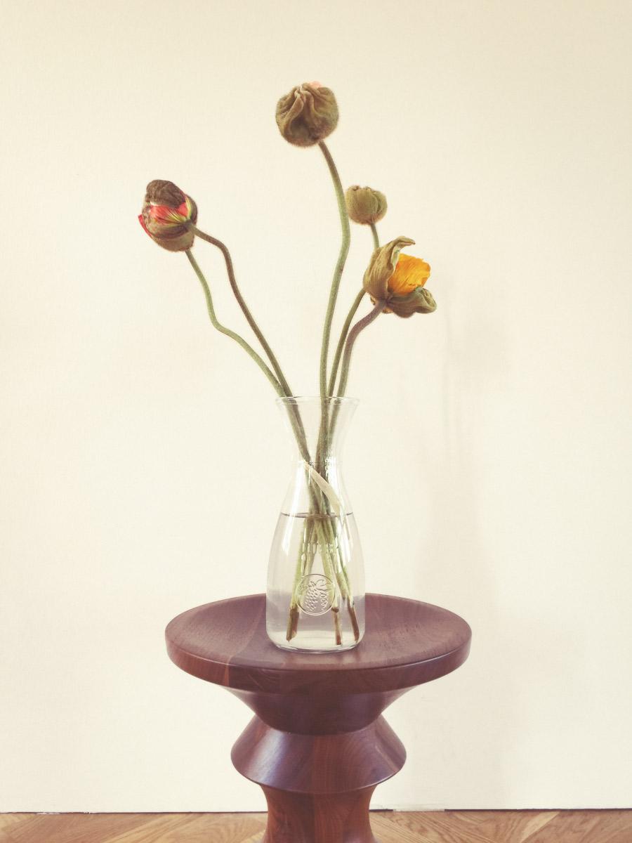 gutschera_osthoff_flowers44